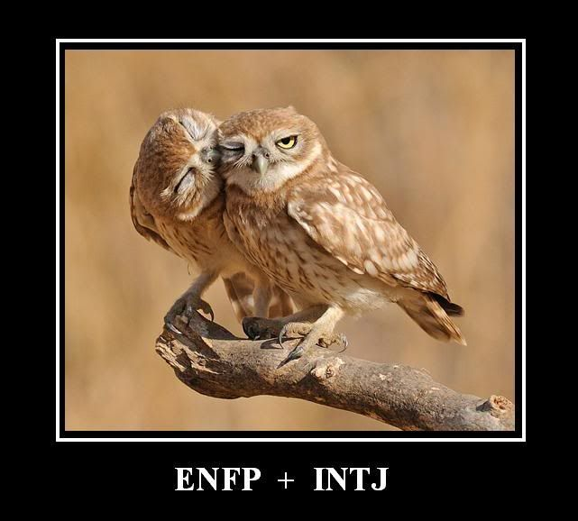 enfp and intj dating an