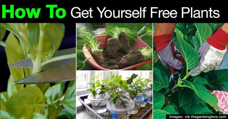 free-plants-22820151140