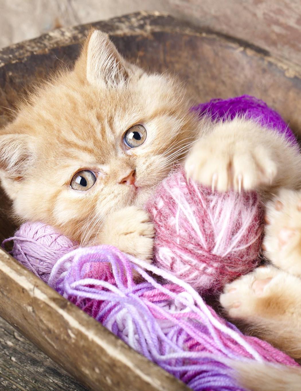 Cute Kitties Adorables Chatons Chats Adorables Photographie De Chat Jolis Chats