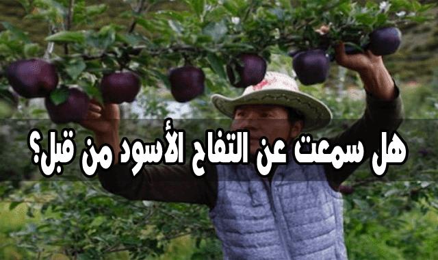 هل سمعت عن التفاح الأسود من قبل Apple Fruit Olive