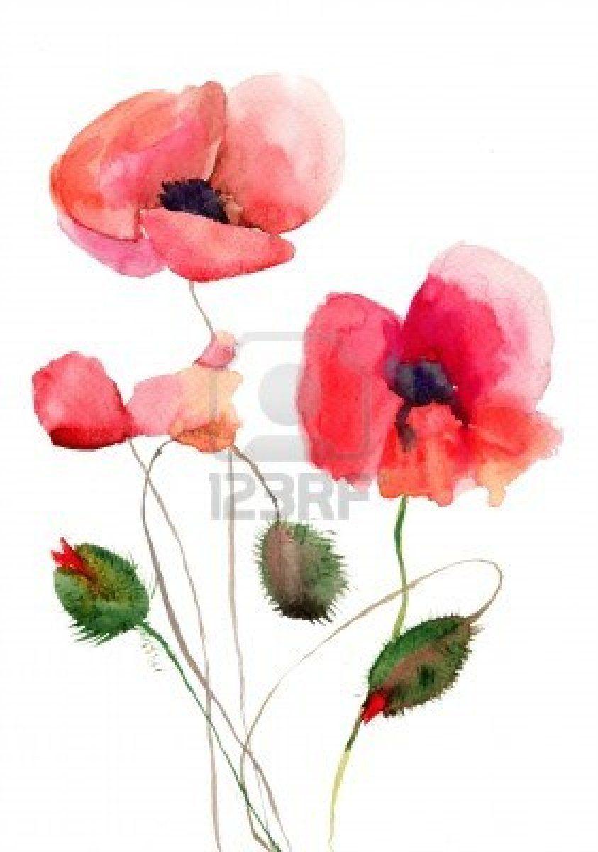 Stylized Poppy Flowers Illustration Watercolor Flowers Pinterest