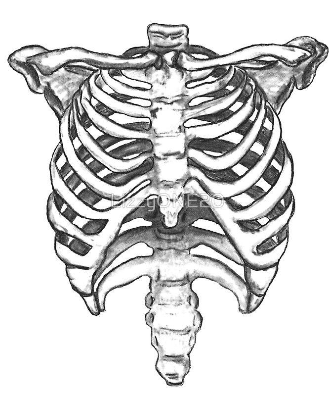 Rib Cage Drawing Art : drawing, Skeleton, Ribcage, Drawings,, Drawing,