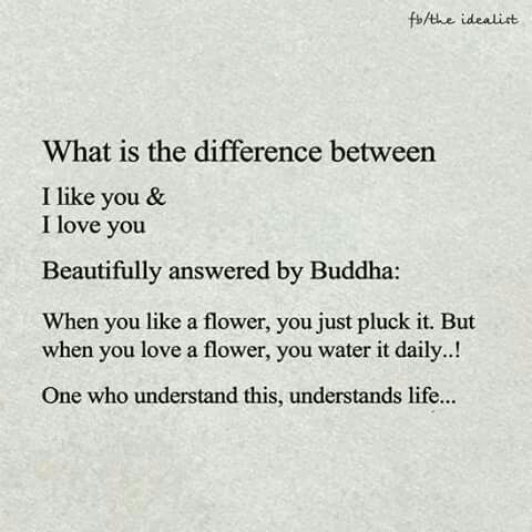 Love Vs Like Buddha With Images Inspirational Quotes