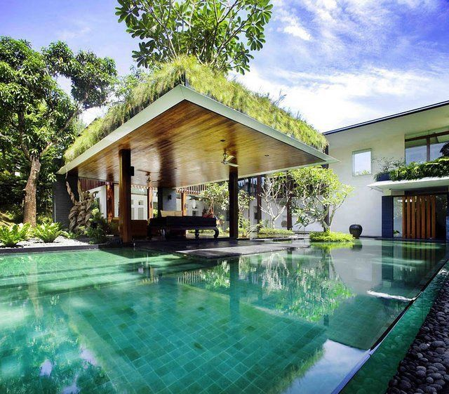 roof planting serene sun house | Grass Covered Pool!!! Bebe'!!! Unusual grass topped pool ...
