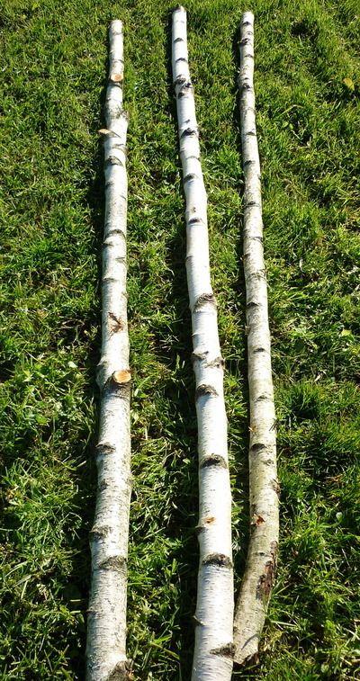 Troncs de bouleaux de 2m en 5 à 7 cm de diametre Décoration bois