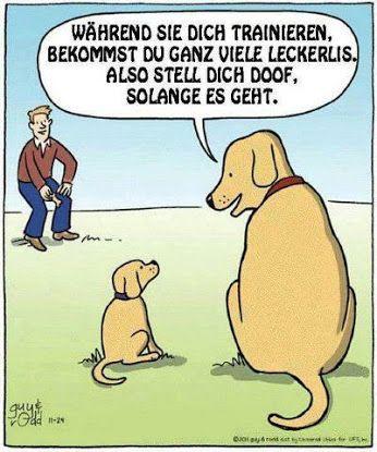 Schleckermaul Humor Hund Buch Geschenk Riesenschnauzer