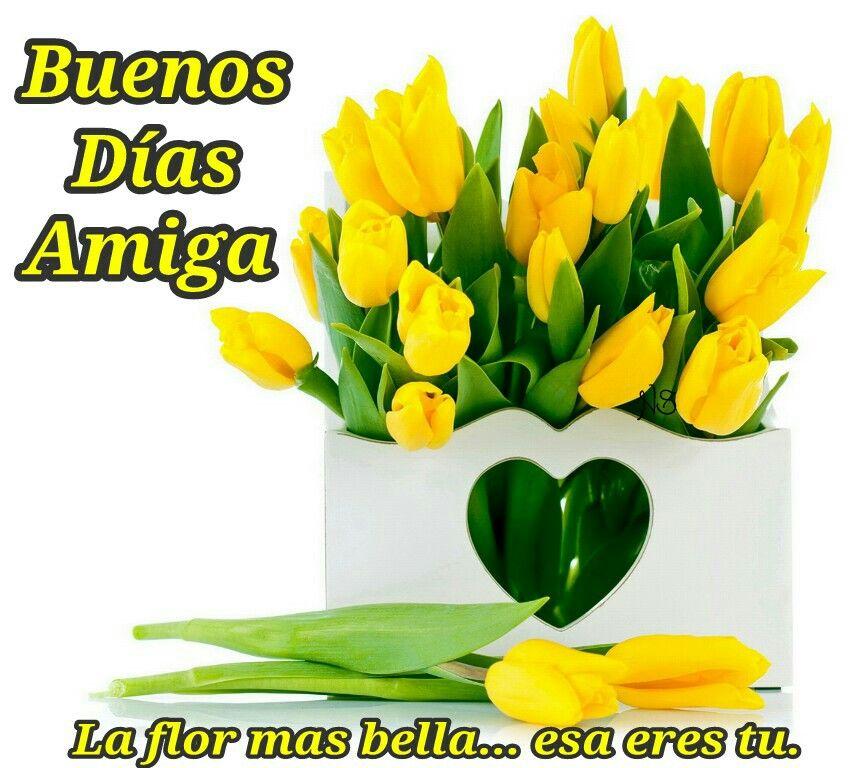 Buenos Días Amiga! La Flor Mas Bella... Esa Eres Tu