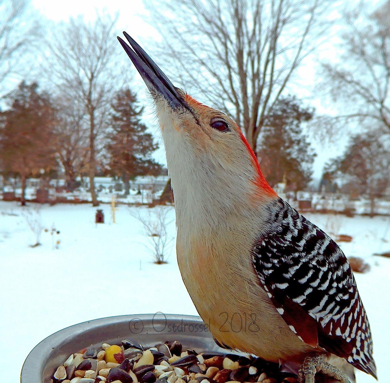 Shaaaaaaddddde… - #america #backyard #birdlovers # ...