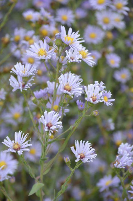 Pin On Native Plant North America