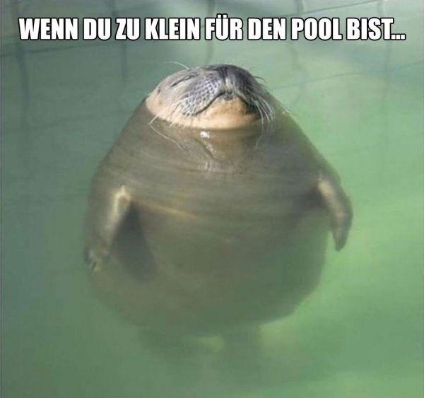 Photo of Hvis du er for liten til bassenget 😅
