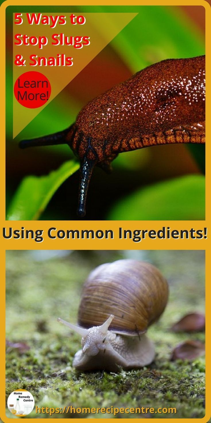How do I get rid of Slugs and Snails in my garden? - Home ...