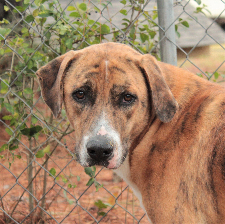 Labrador Retriever dog for Adoption in Canton, CT. ADN
