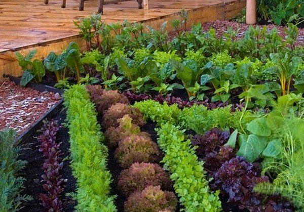 small vegetable garden ideas patio design ideas how to choose ...