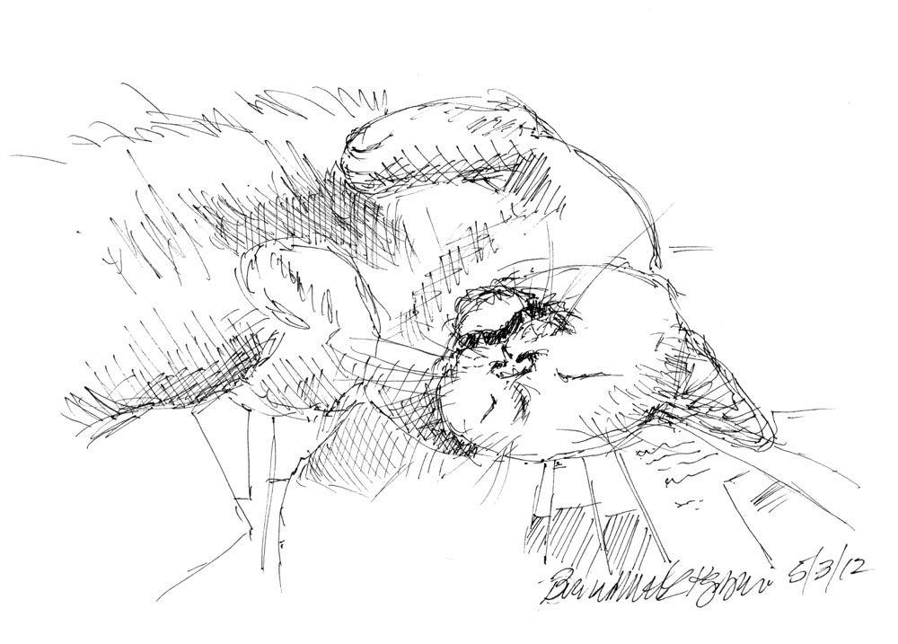 Daily Sketch Reprise: A Vigilant Nap, 2013