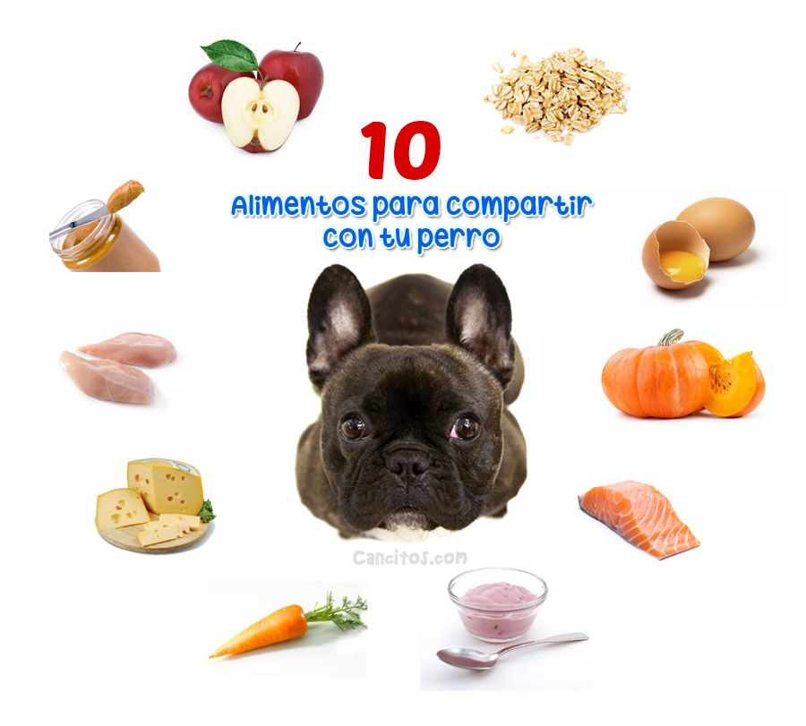 10 Alimentos De Consumo Humano Saludables Para Tu Perro Perros