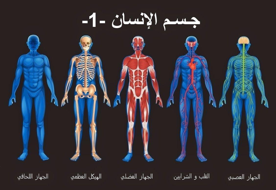 تشريح عضلي لجسم الانسان Yahoo Image Search Results Fifth Grade Body Systems Secondary Science Lessons