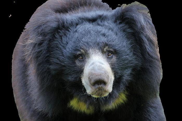 Pinnawalla Zoo Png Transparent Image Image Black Bear Zoo