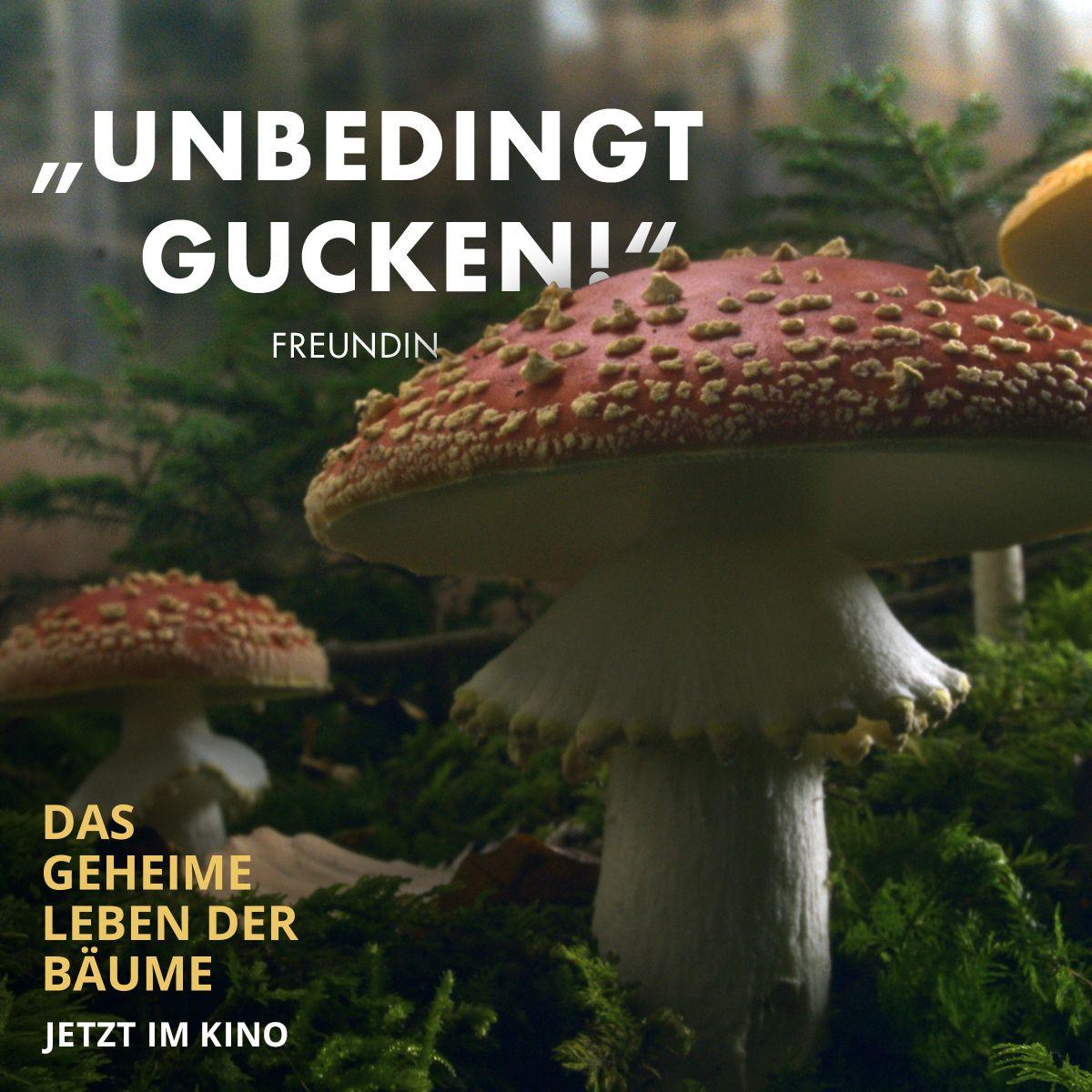 Pin Von Constantin Film Auf Das Geheime Leben Der Baume