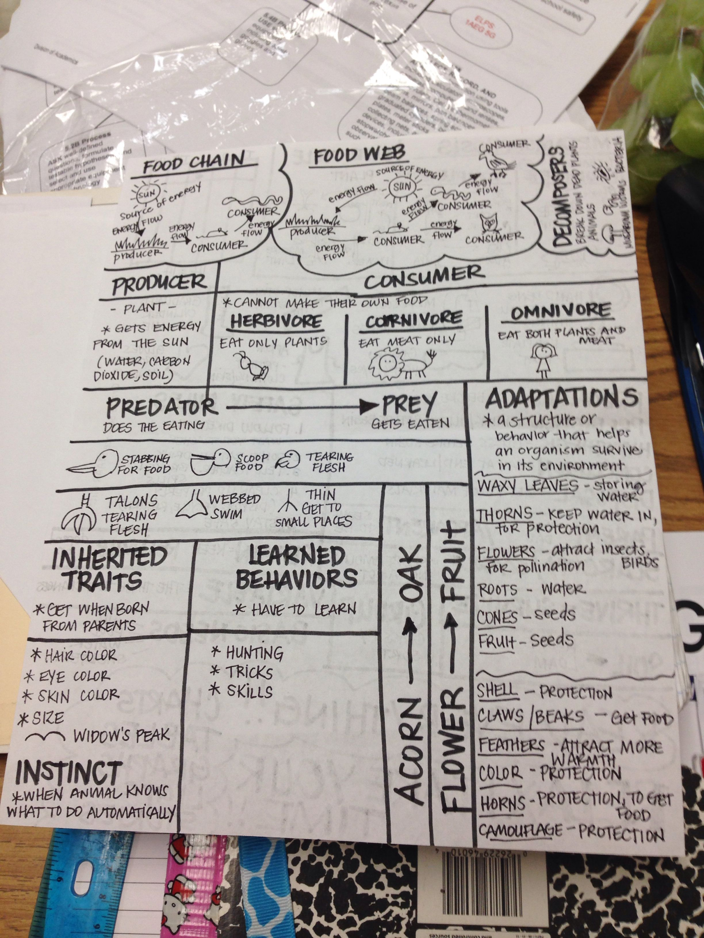 Science Staar Review Sheet 1 I Have Students Make To