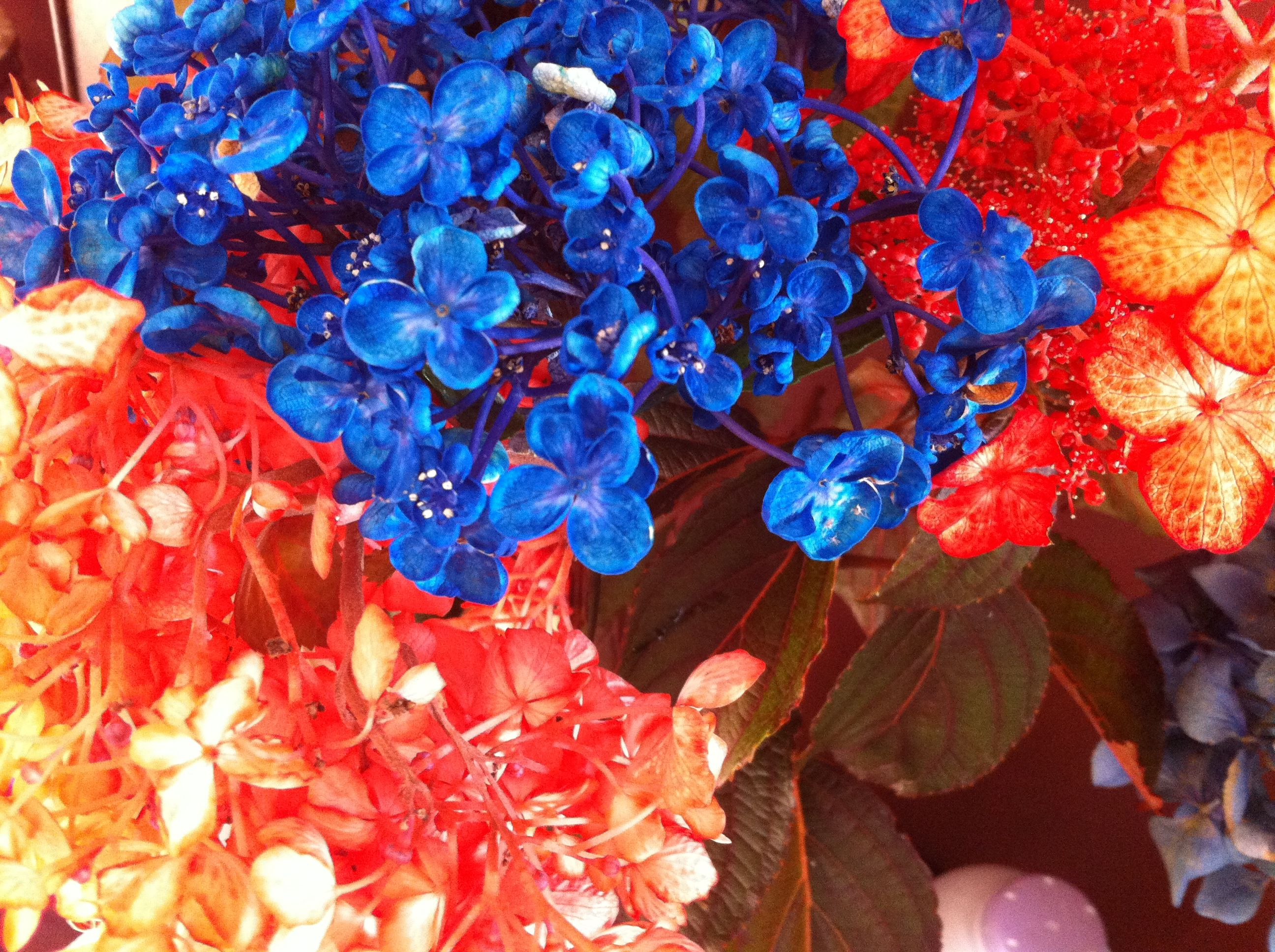Dye flowers (hydrangeas are good) to learn how they drink up the ...