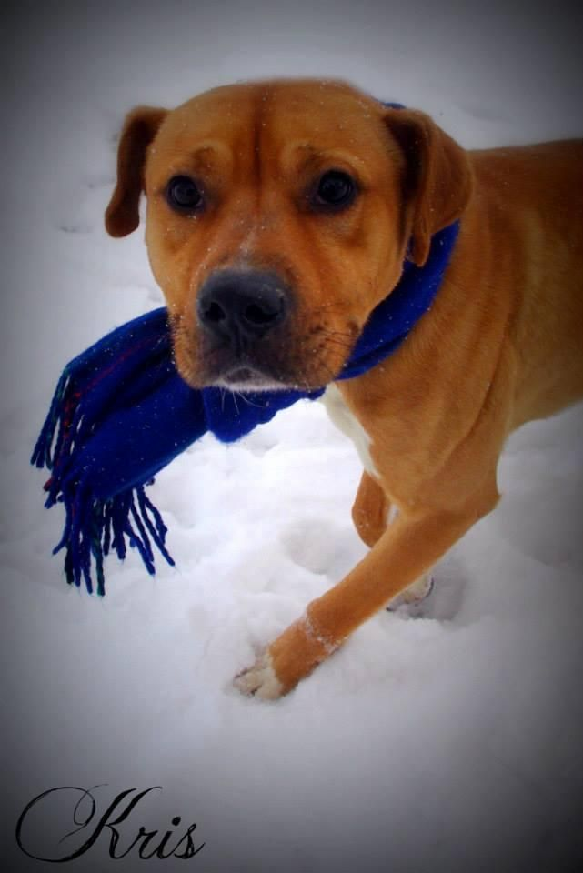 Adoptable Dogs In Youngstown Ohio