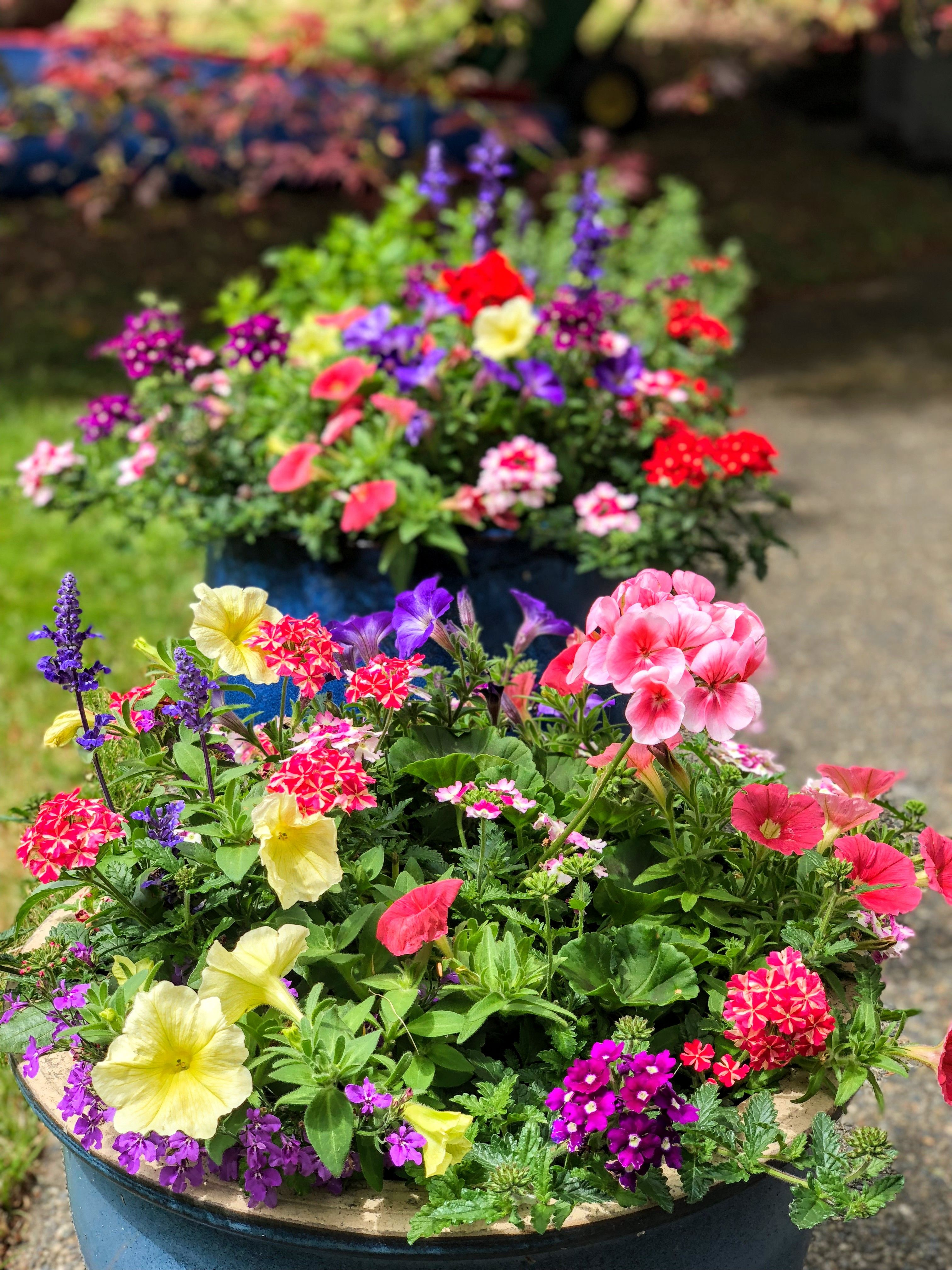 Bright Summer Flower Pots For The Patio Such A Pretty Way To Create