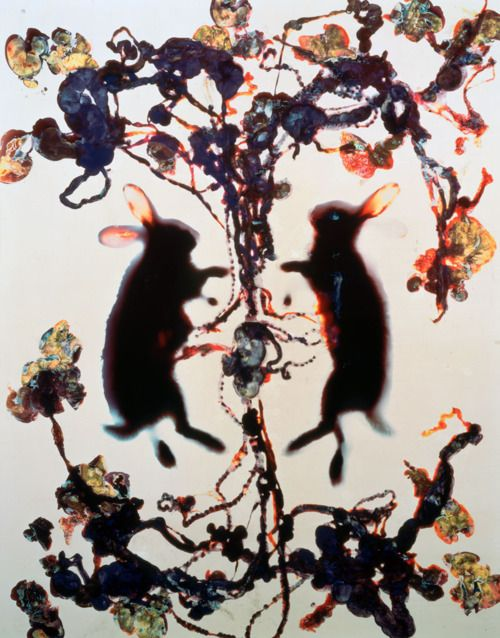 'Love' by Adam Fuss, 1993, Cibachrome photogram.