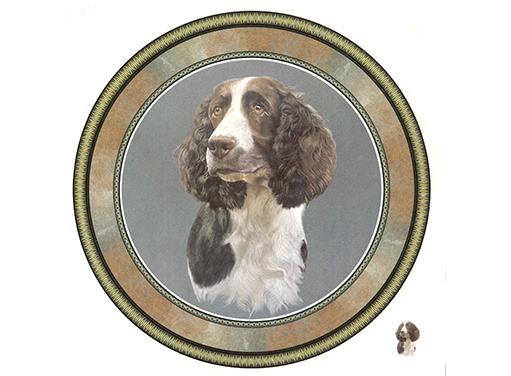 229 Springer Spaniel Dog