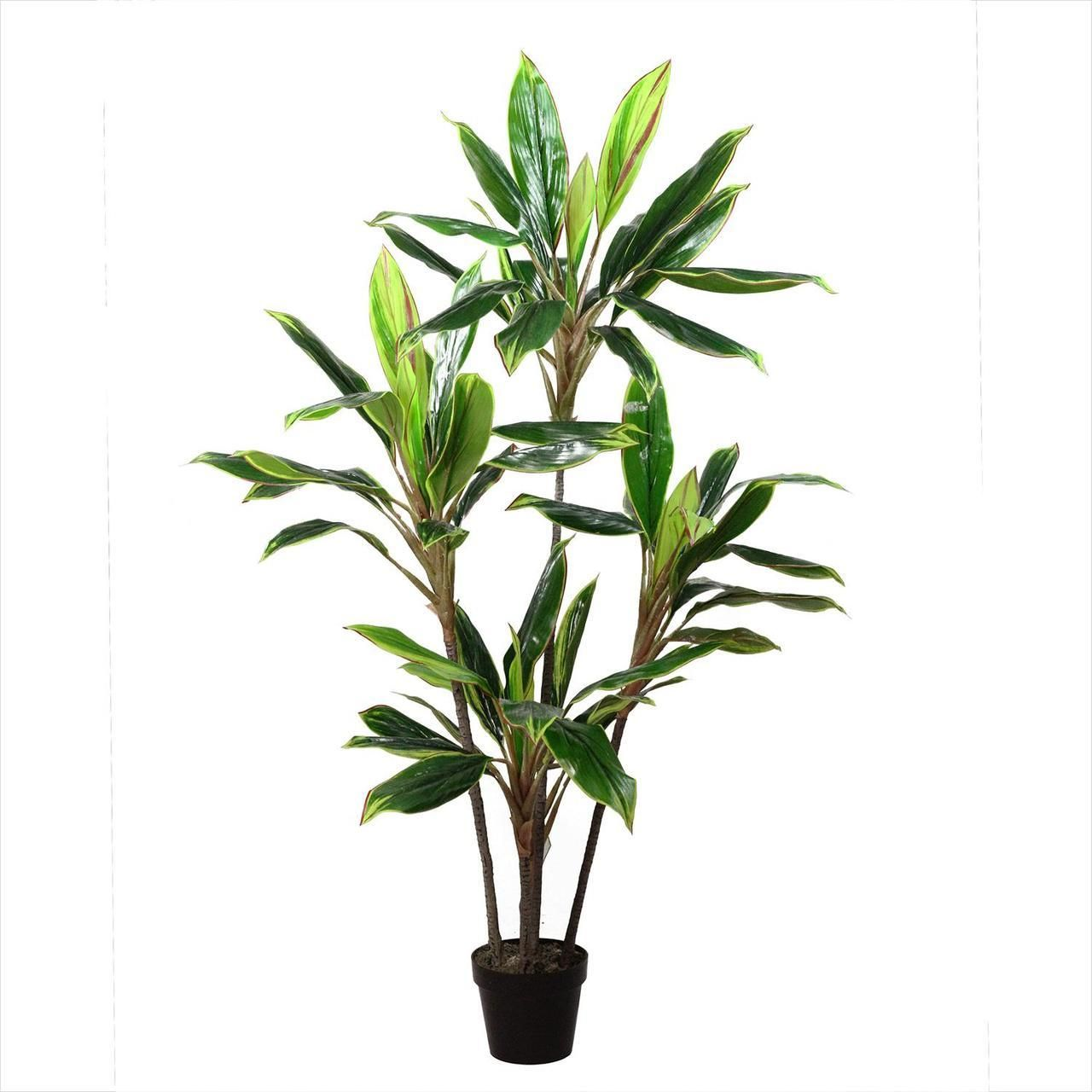 Easy to care for and never needs watering the dracaena artificial