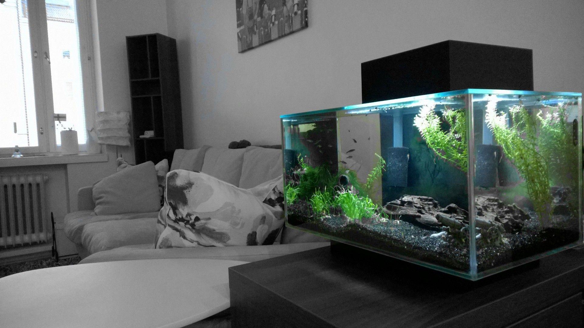 Aquarium wohnzimmer ~ Fluval edge nano l with led lights aquarium