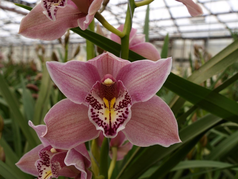 OrchidVarietiesLargeg OrchidsOrquideas Pinterest