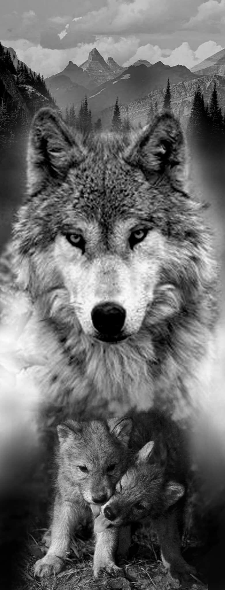 Значение татуировки волк воющий на луну, волк с оскалом и волчица | 2048x781