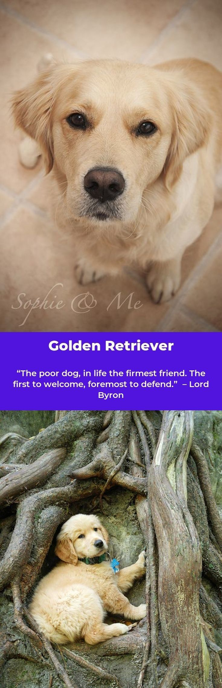 Pin By Birdie Medlin On Cute Poor Dog Dogs Labrador Retriever