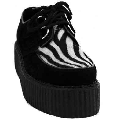Zebra creepers