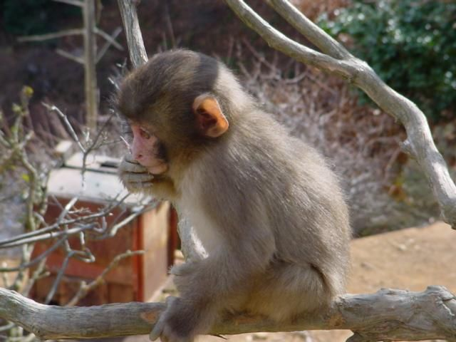 Monkey+at+Arashiyama.JPG 640×480 pixels