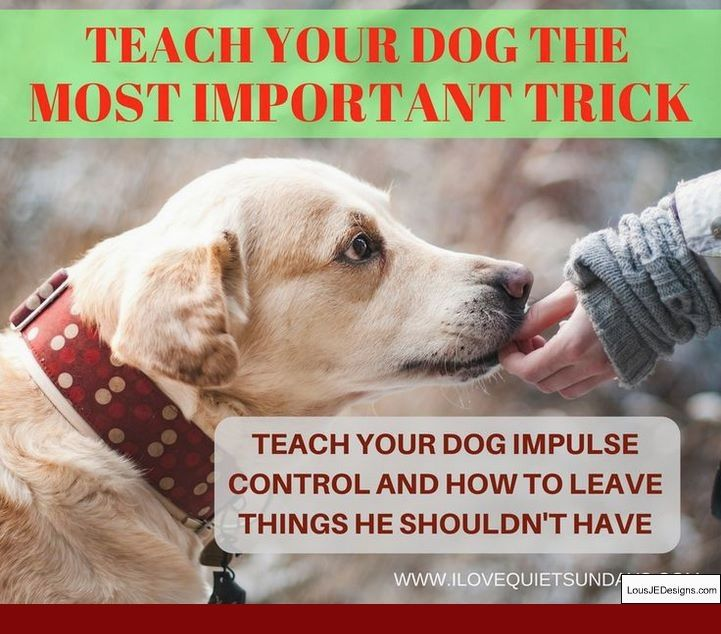How To Train Your Dog To Stay No Matter What And Pics Of How To