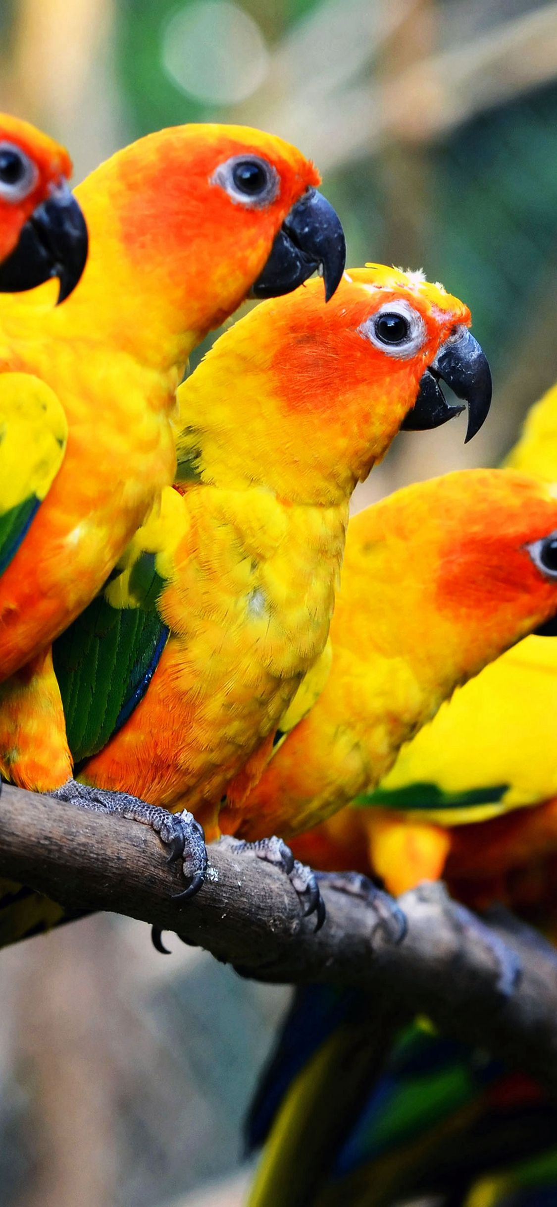 Mocking Bird Family Nature Art iPhone X Wallpapers