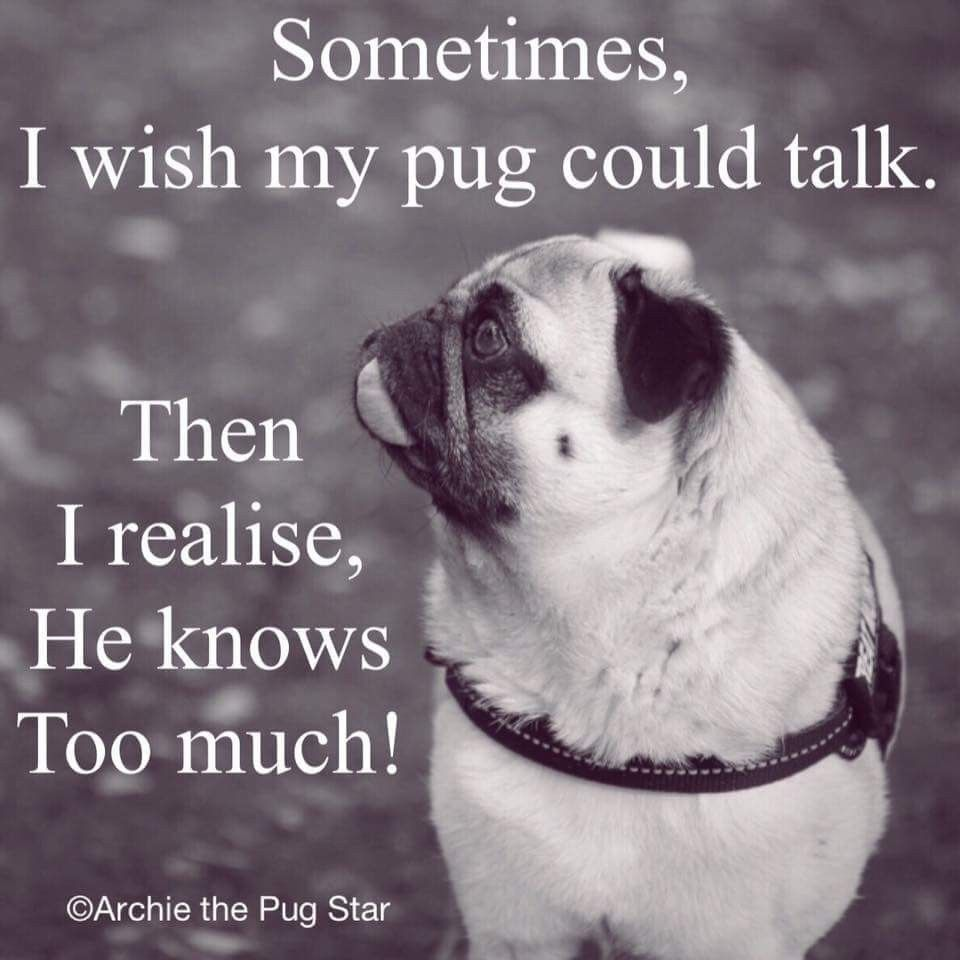 Makes Me Smile Image By Serena Temple Cute Pugs Pugs Funny Pug