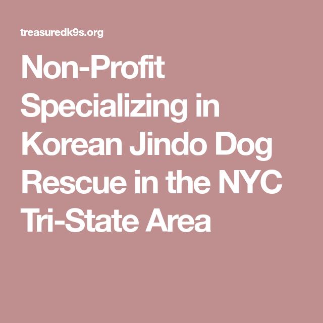 Non Profit Specializing In Korean Jindo Dog Rescue In The Nyc Tri State Area Jindo Dog Rescue Dogs Jindo
