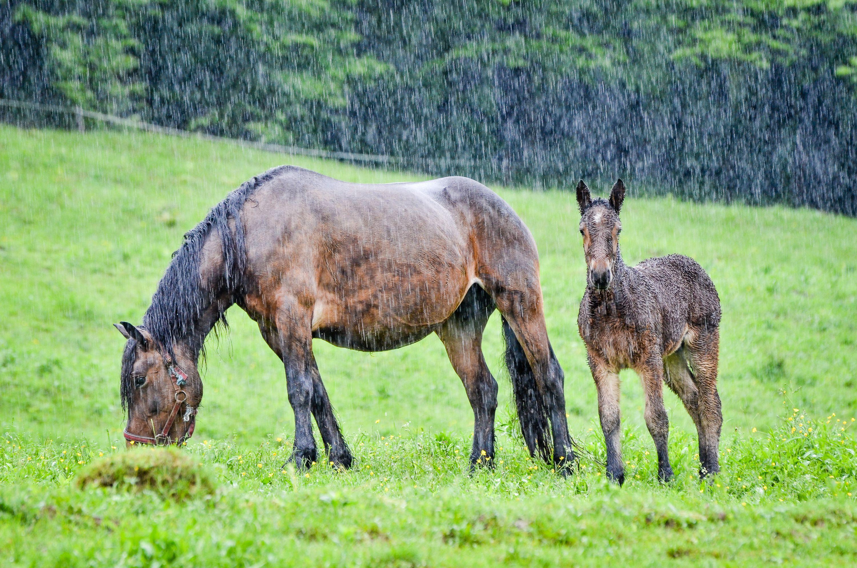 How To Identify And Treat Rain Scald On Your Horse Horses Horse Rain Rot Rain Rot