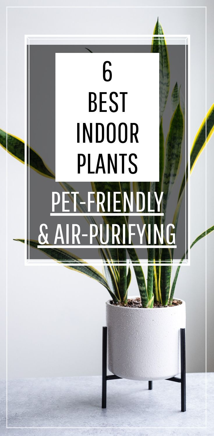 6 Of The Best Indoor Plants That Are Both Pet Friendly And Awesome Air Purifiers These Housepl In 2020 Indoor Plants Pet Friendly Big Indoor Plants Best Indoor Plants