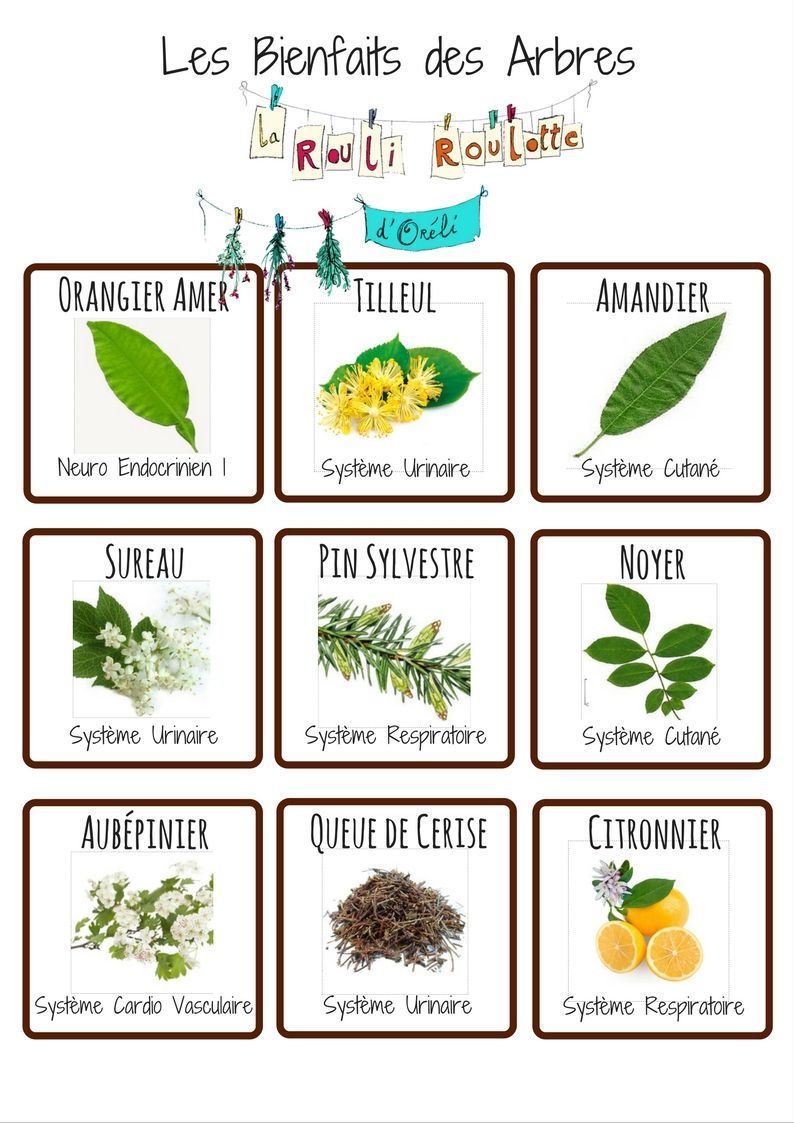 Epingle Sur Les Bienfaits Des Plantes