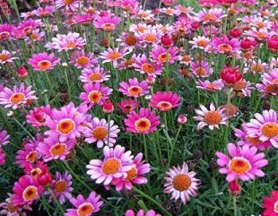 Barrett's Flowers And Gardens Adrian Mi