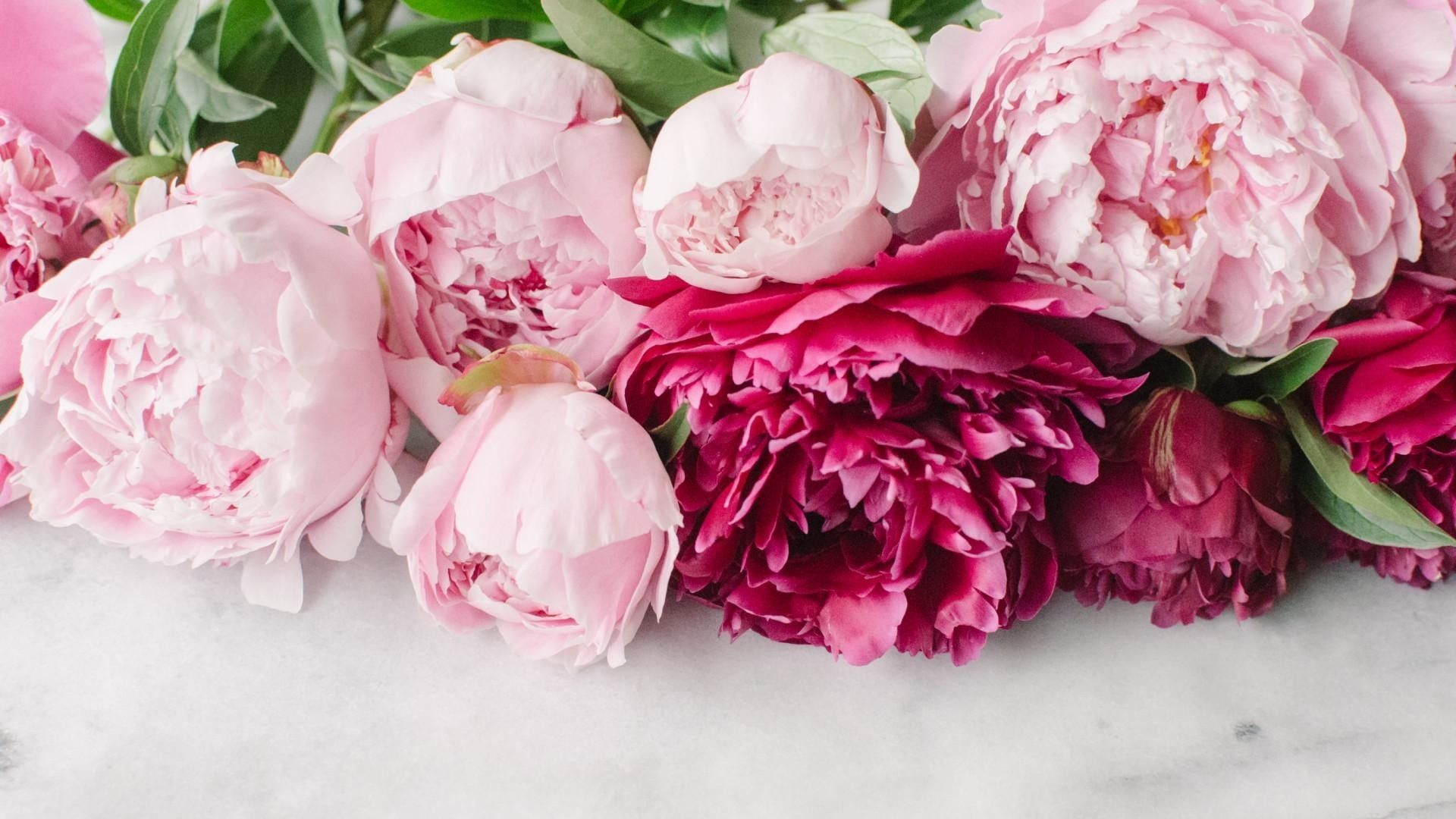 65 Peony Desktop Wallpapers on WallpaperPlay (With images
