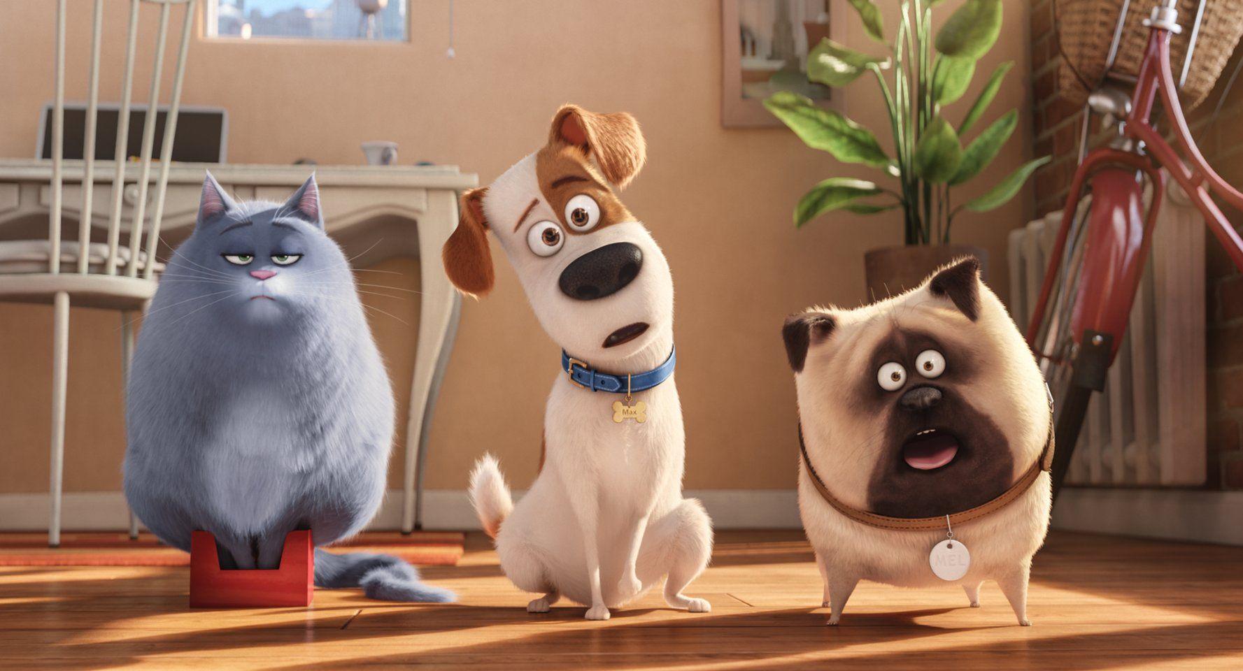 The Secret Life Of Pets 2016 Imdb Com Imagens Filme Pets