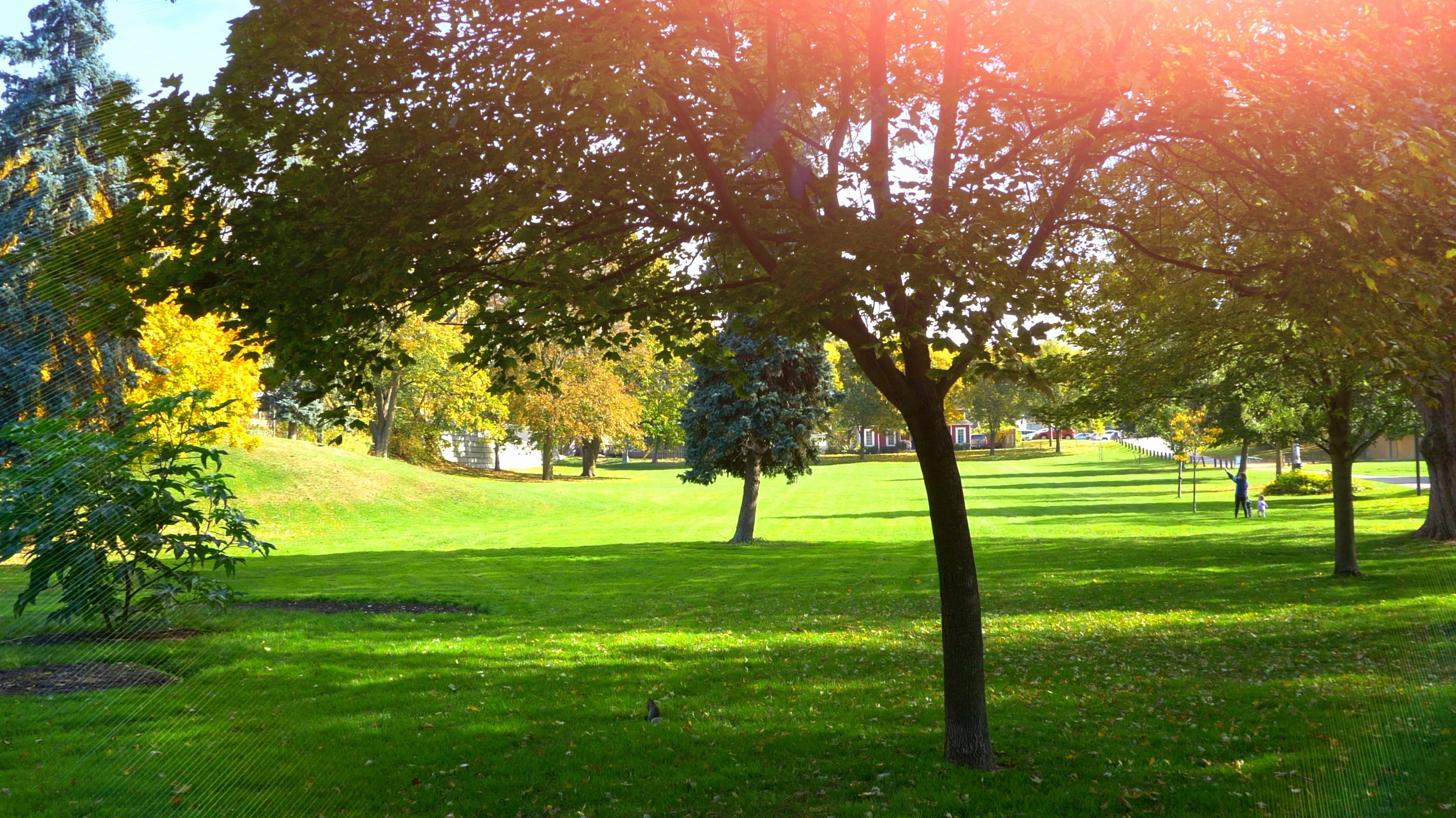 Green Park Grass Beautiful City Lawn Nature Background Outdoor Garden Landscape Sto Country Garden Landscaping Outdoor Gardens Landscaping Grasses Landscaping