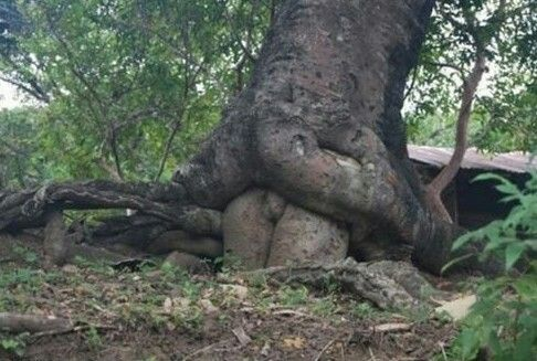 Sometimes nature is funny