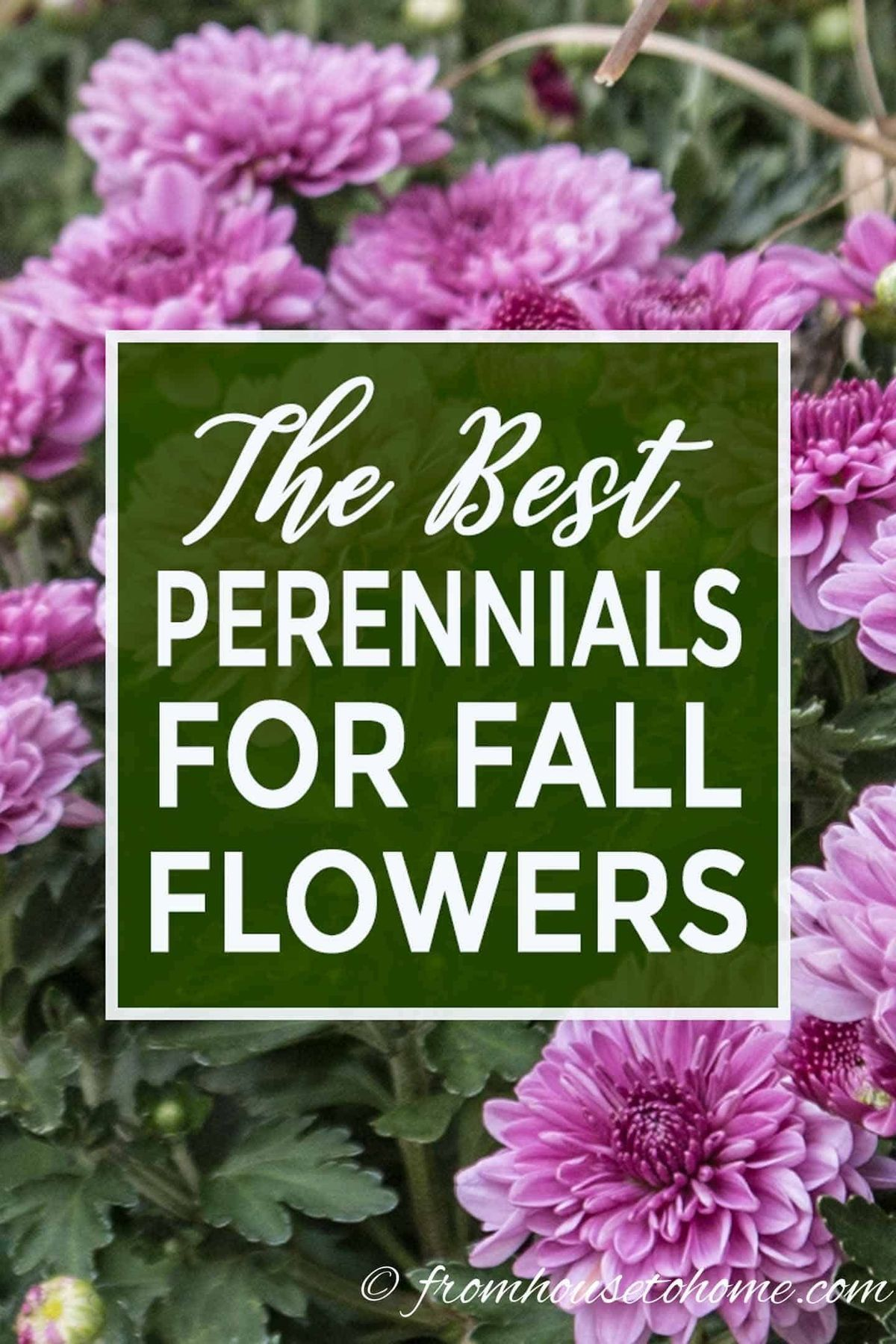 15 Of The Best Plants That Bloom In Fall Cut Flower Roadside Stand