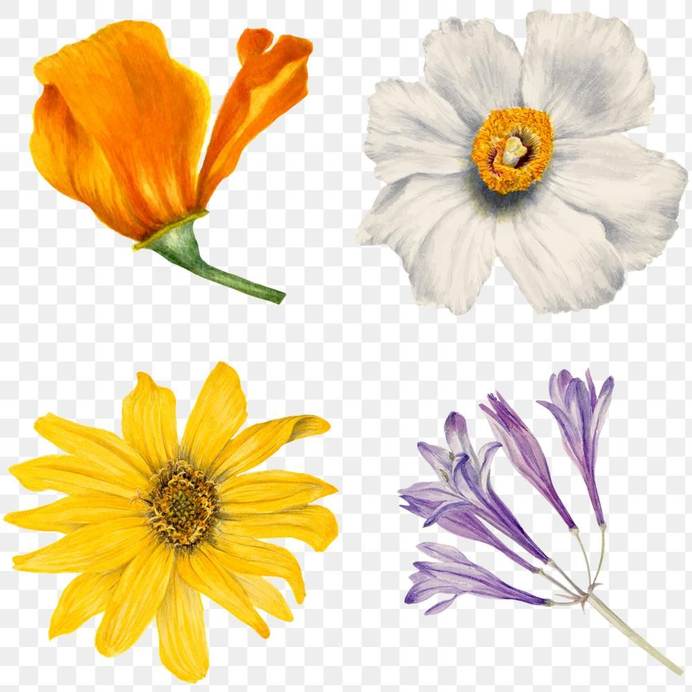 Wild Flowers Png Botanical Sticker Set Free Image By Rawpixel Com Manotang Flower Illustration Herb Art Art Prints