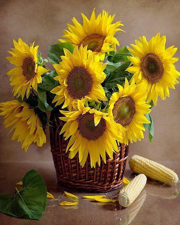 g stebuch von helene23 sonnenblumen pinterest sonnenblumen blumen und. Black Bedroom Furniture Sets. Home Design Ideas